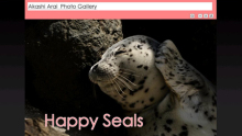 Happy Seals