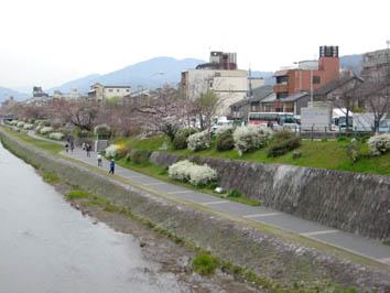 京都さくらたより_b0153663_1347914.jpg