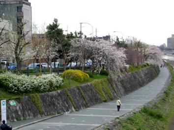 京都さくらたより_b0153663_13484082.jpg