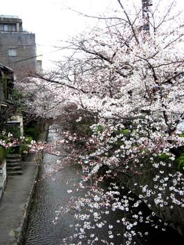 京都さくらたより_b0153663_13522559.jpg