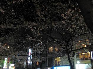 京都さくらたより_b0153663_1356287.jpg