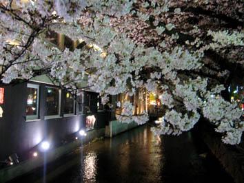 京都さくらたより_b0153663_1356388.jpg