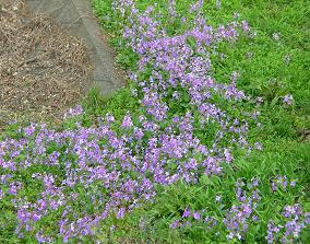 おひとりさまの花見 その一_f0139963_23541869.jpg