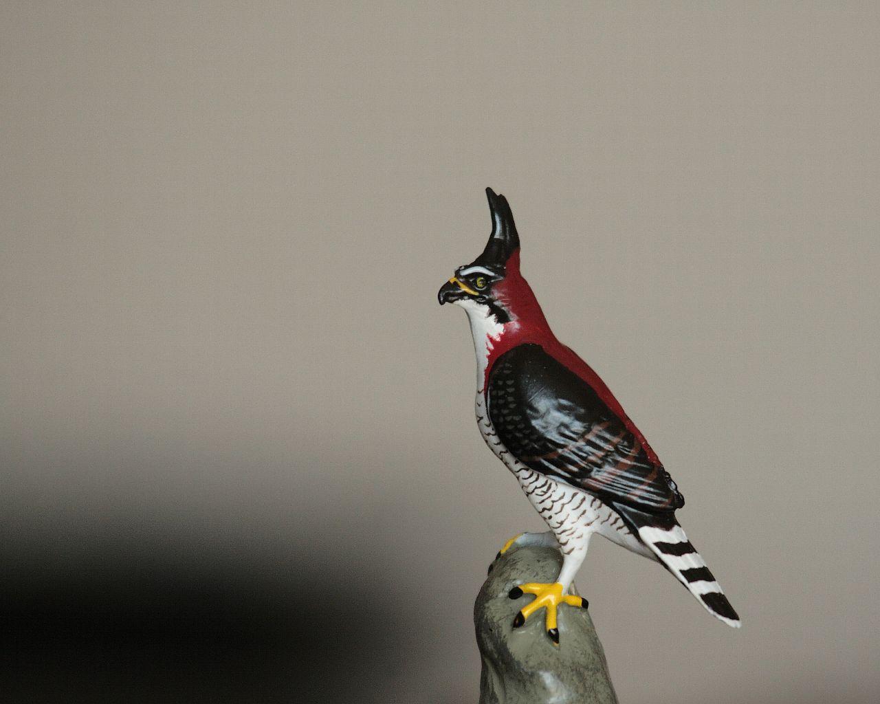 神奈川県厚木市に超がつく珍鳥アカエリクマタカが出現_f0105570_21485846.jpg