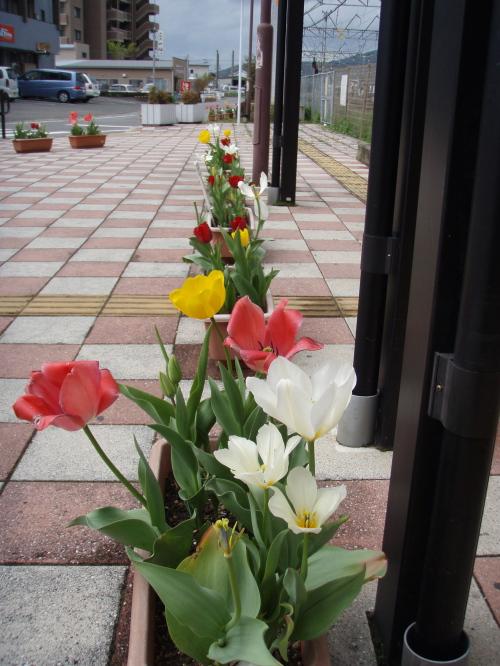 駅の花_a0077071_21414434.jpg