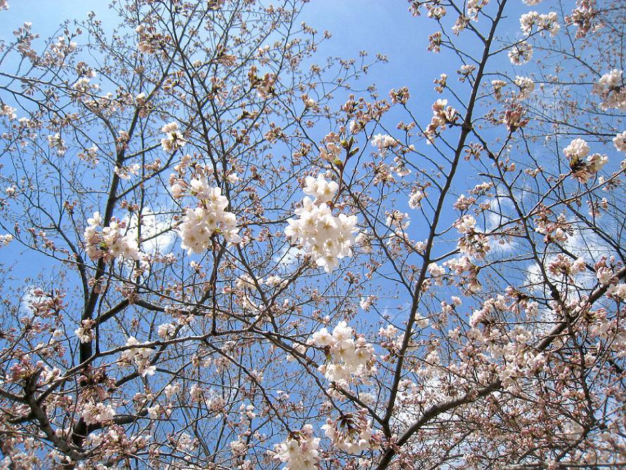 春の空気_a0107574_20302932.jpg