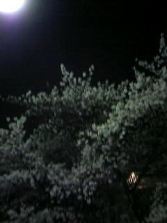 f0100480_20324559.jpg