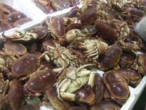 ロンドンの築地市場Billingsgate Fish Marketへ!しかし・・・_e0030586_232541.jpg
