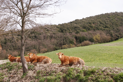 お肉を受け取りに行きました~南トスカーナにて_f0106597_19113539.jpg