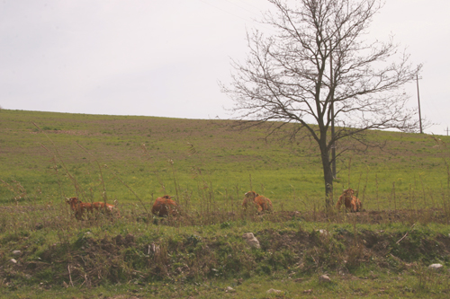 お肉を受け取りに行きました~南トスカーナにて_f0106597_1911580.jpg