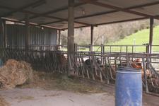 お肉を受け取りに行きました~南トスカーナにて_f0106597_19131719.jpg
