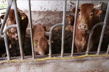 お肉を受け取りに行きました~南トスカーナにて_f0106597_19153425.jpg