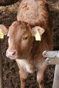 お肉を受け取りに行きました~南トスカーナにて_f0106597_19191658.jpg