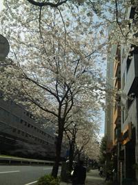 桜色の街_a0114206_2291256.jpg