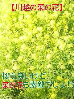 f0138311_1124972.jpg