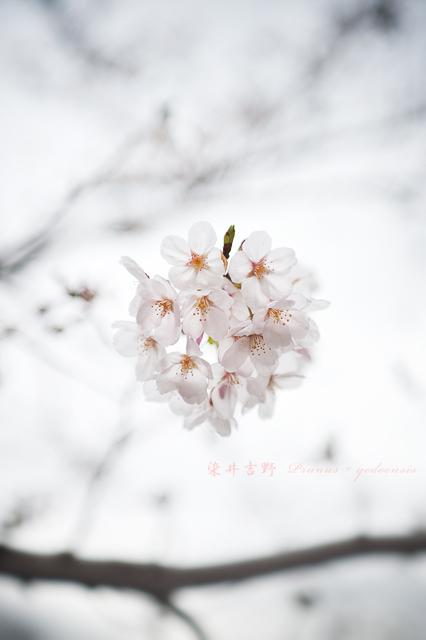 花 舞_e0117517_18455529.jpg