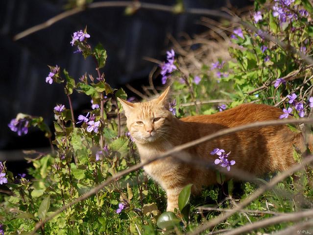 春を 窺う_f0197128_21401043.jpg