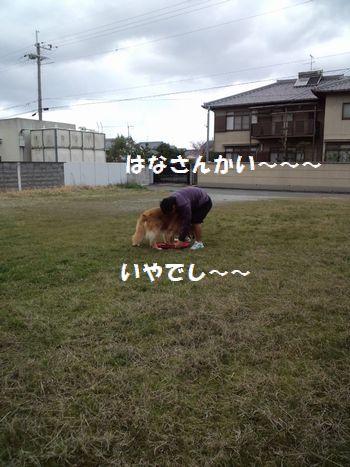 b0127531_19495983.jpg