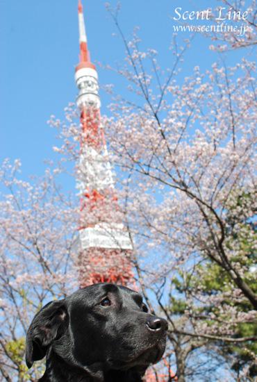東京のタワー_c0099133_22503452.jpg