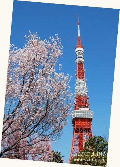 東京のタワー_c0099133_22511843.jpg