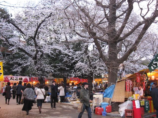 夜桜能_f0180433_2344175.jpg