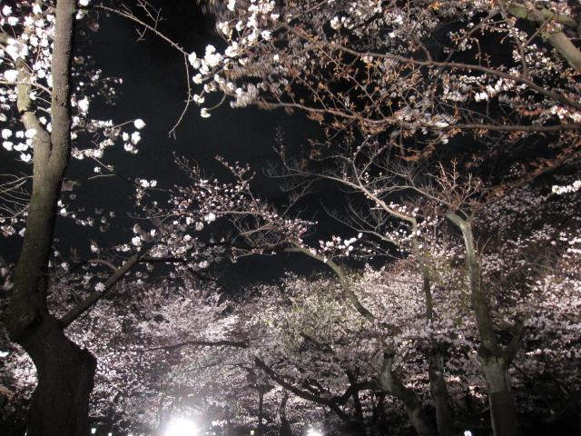 夜桜能_f0180433_23445154.jpg