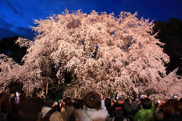 姥桜 と は 老いて も 尚 美しい ...