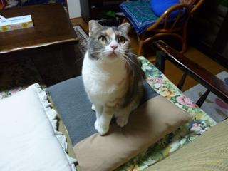 猫のお友だち マミちゃんユキちゃん編。_a0143140_21181620.jpg