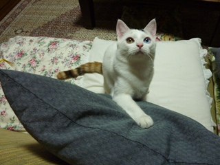 猫のお友だち マミちゃんユキちゃん編。_a0143140_21183972.jpg