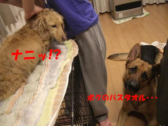 c0192541_043753.jpg