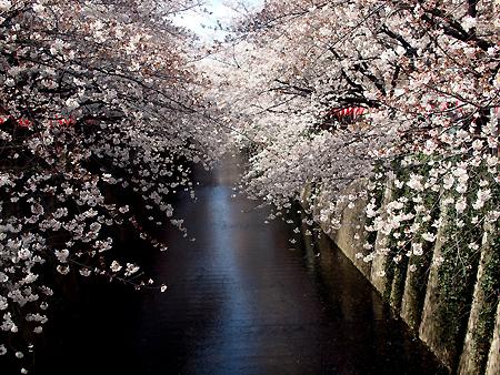春が来た♪_e0172847_7422797.jpg