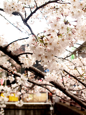 春が来た♪_e0172847_95526.jpg