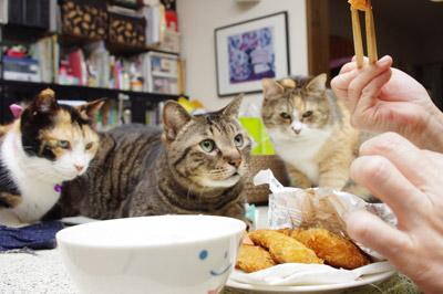 夕ご飯は、魚フライ_a0028451_1251226.jpg