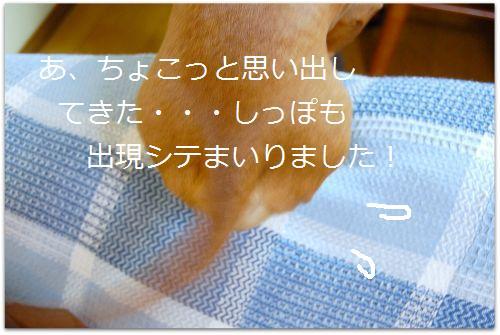 b0112758_15582864.jpg