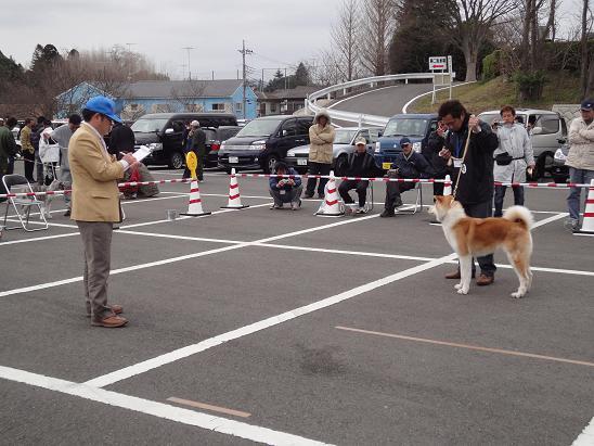 秋田犬の展覧会_b0124462_9505338.jpg