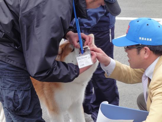 秋田犬の展覧会_b0124462_9515086.jpg