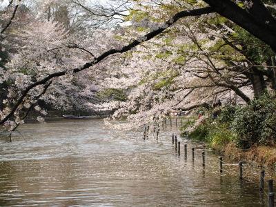 井の頭公園は桜が見頃です!_e0126063_19202189.jpg