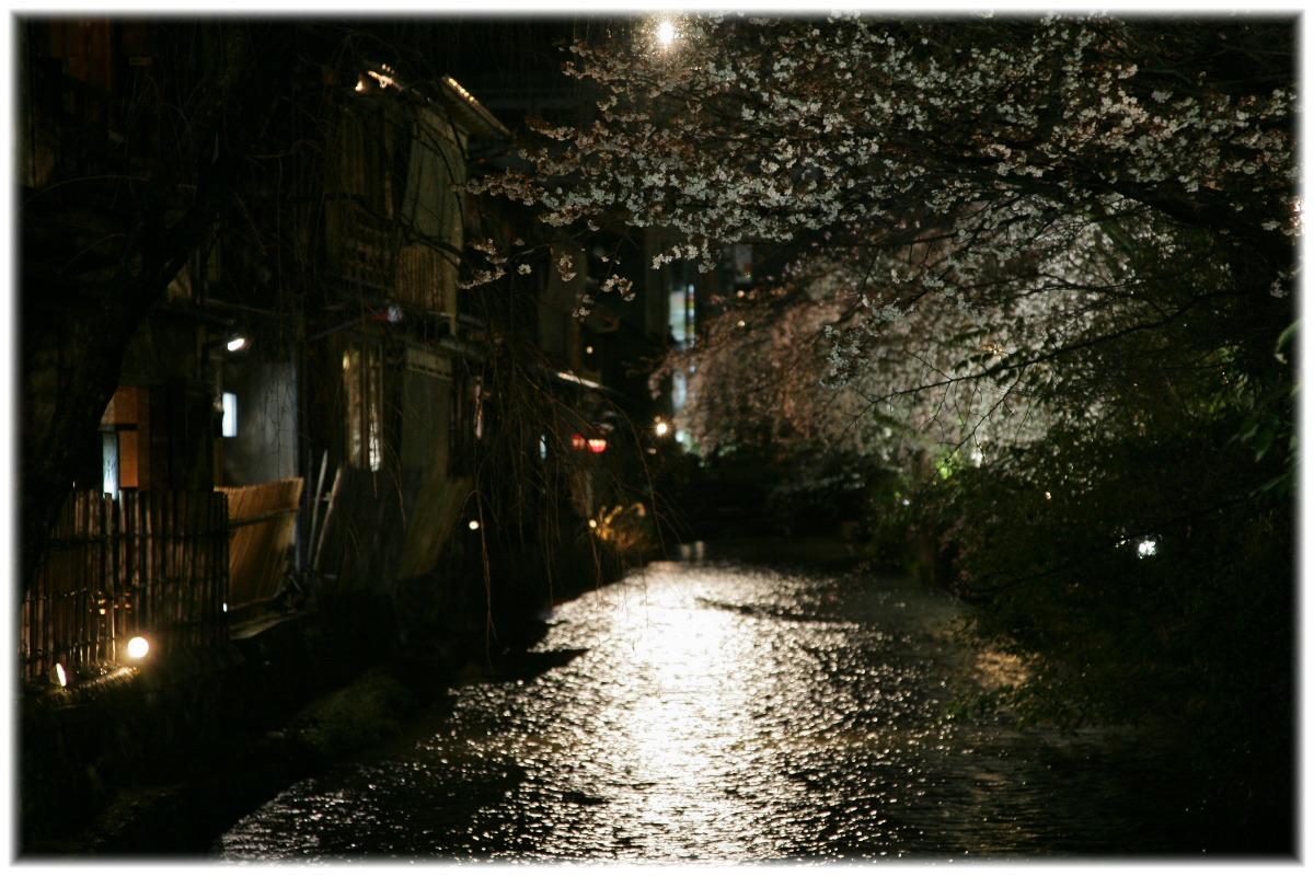 祇園 白川 桜 2010  1_f0021869_0394659.jpg
