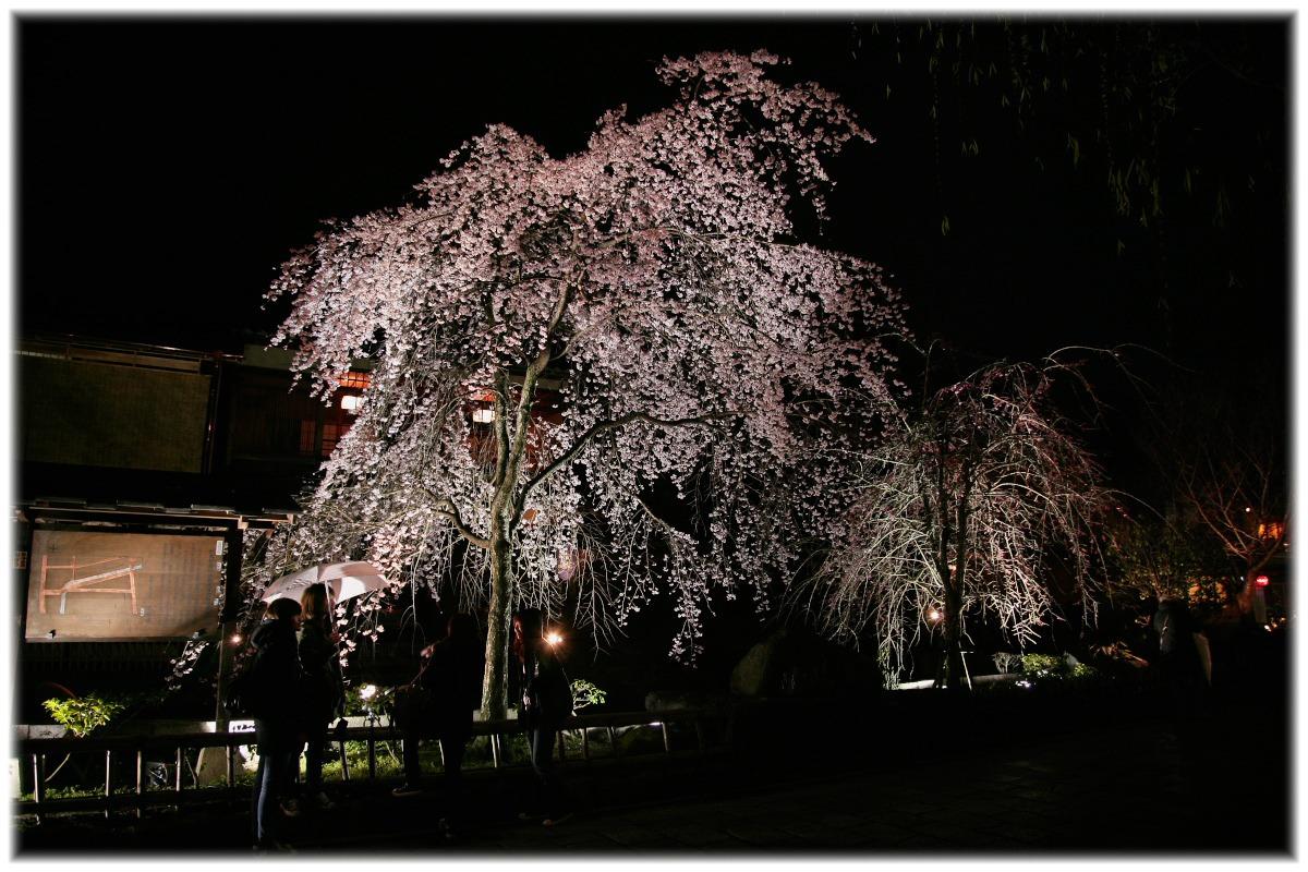 祇園 白川 桜 2010  1_f0021869_040469.jpg