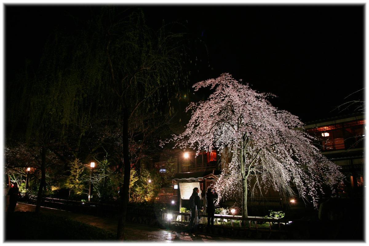 祇園 白川 桜 2010  1_f0021869_041654.jpg