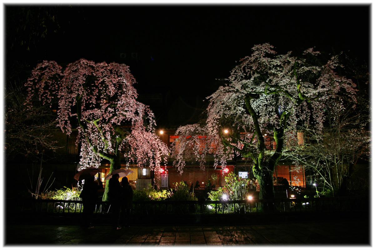 祇園 白川 桜 2010  1_f0021869_0461517.jpg