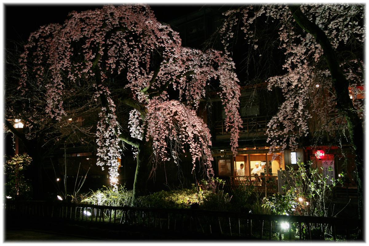 祇園 白川 桜 2010  1_f0021869_0464270.jpg