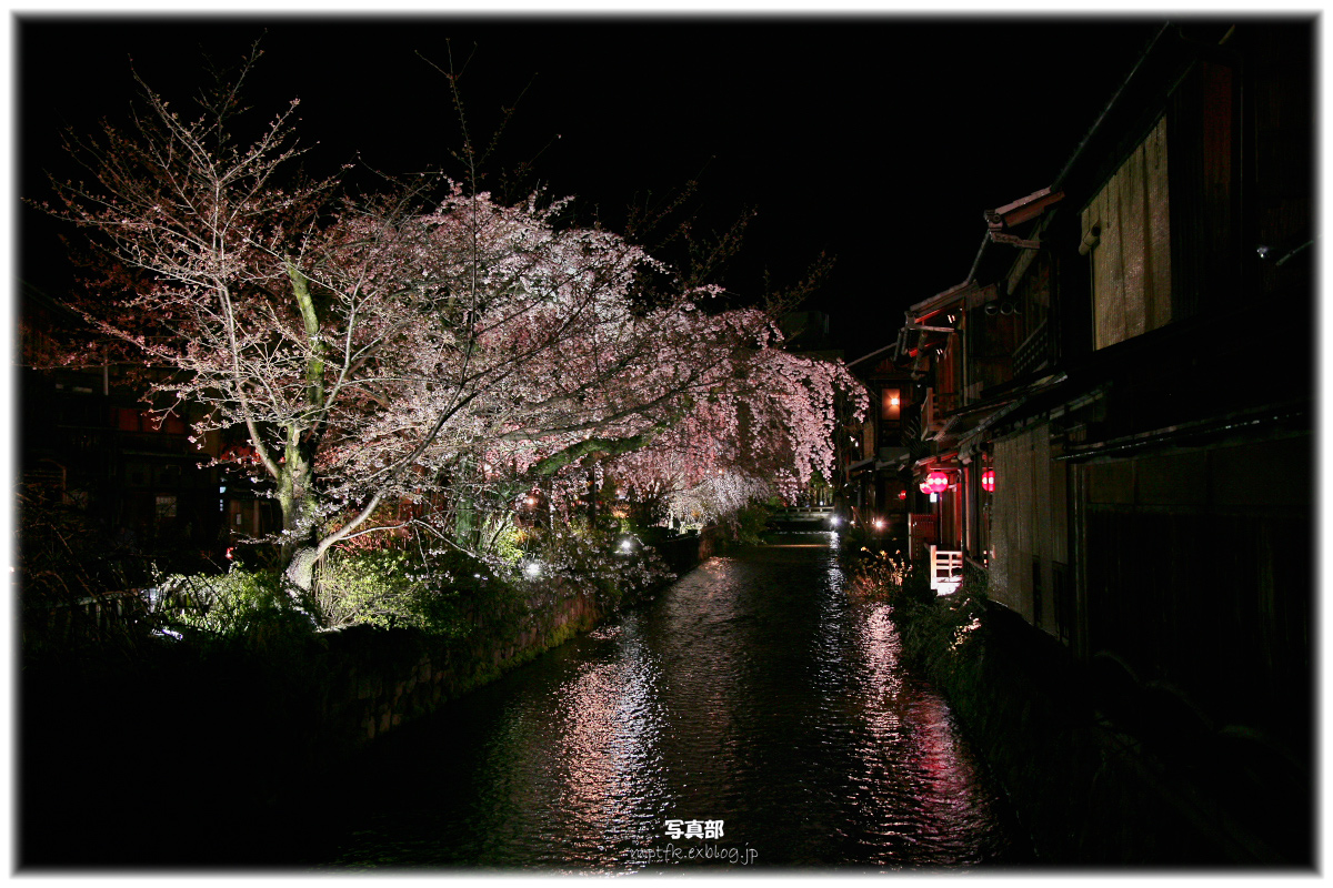 祇園 白川 桜 2010 2_f0021869_21332695.jpg