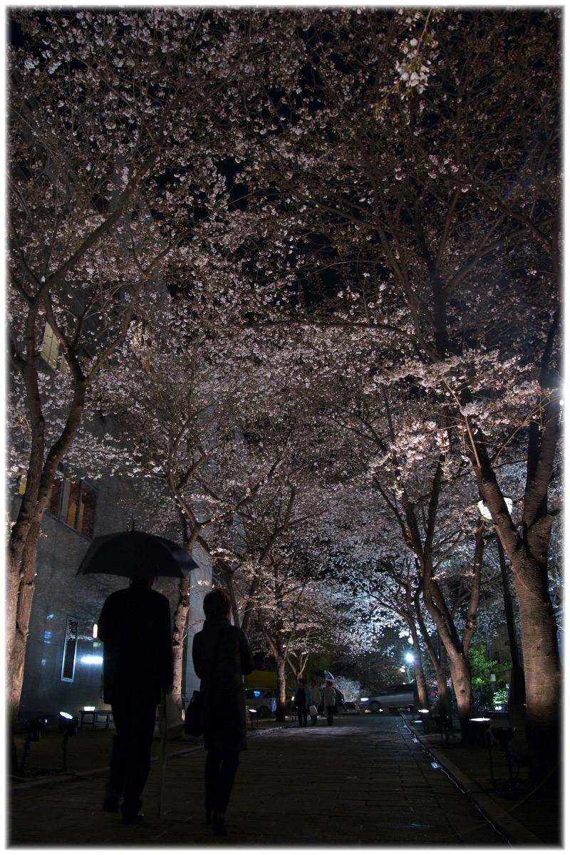 祇園 白川 桜 2010 2_f0021869_2210115.jpg