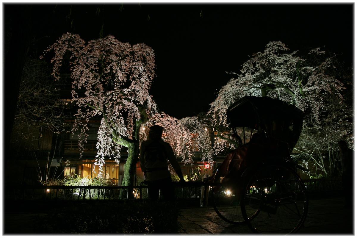 祇園 白川 桜 2010 2_f0021869_2252569.jpg