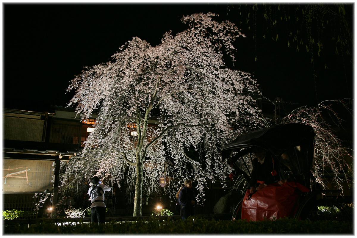 祇園 白川 桜 2010 2_f0021869_2255841.jpg