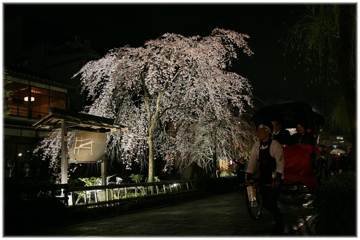 祇園 白川 桜 2010 2_f0021869_2262592.jpg