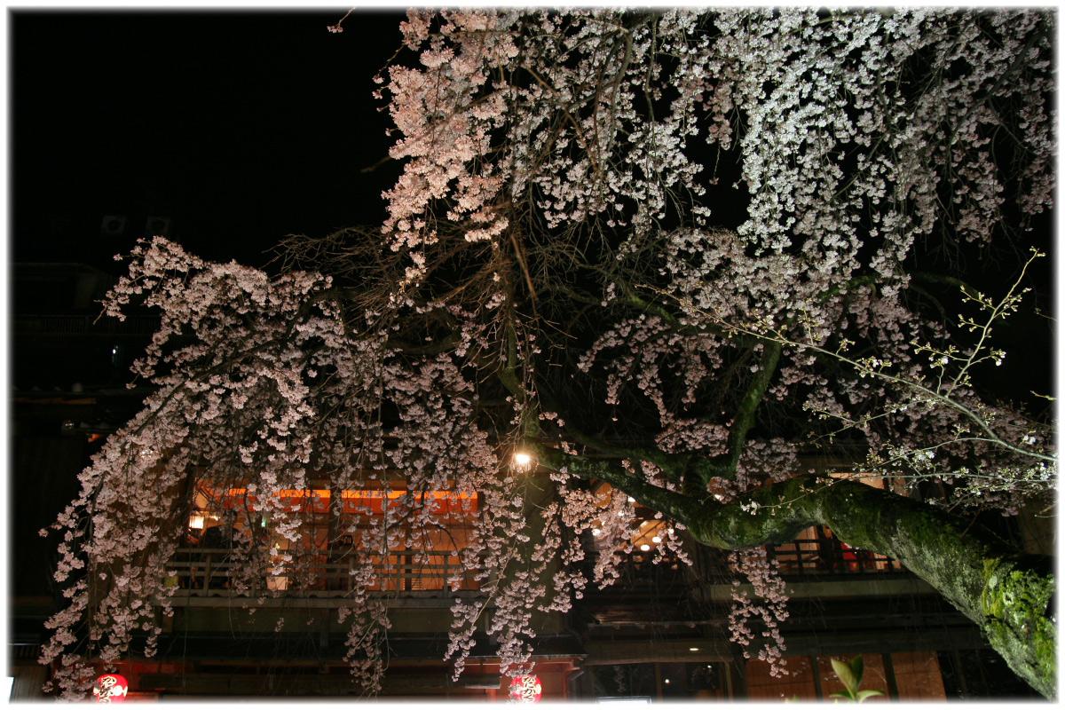 祇園 白川 桜 2010 2_f0021869_226514.jpg