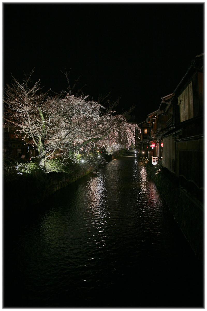 祇園 白川 桜 2010 2_f0021869_229178.jpg