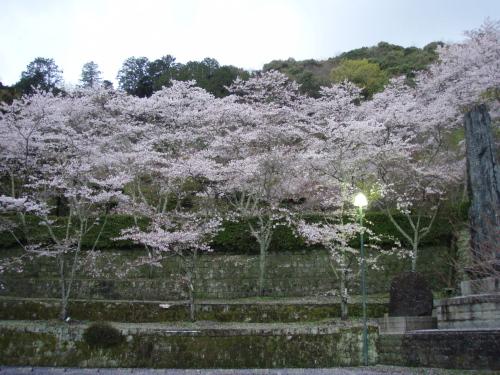 桜山公園_a0077071_17352029.jpg